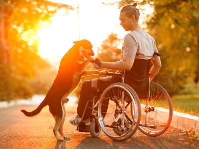 Man in wheel chair with dog and sunset in the background